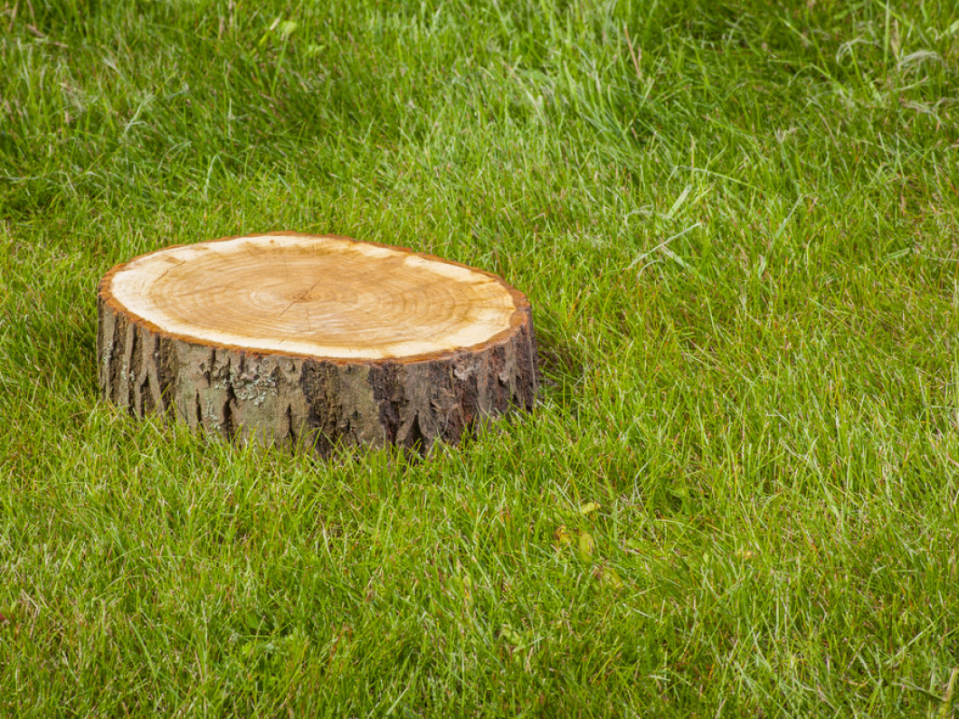 Don't Feel Stumped About Your Yard